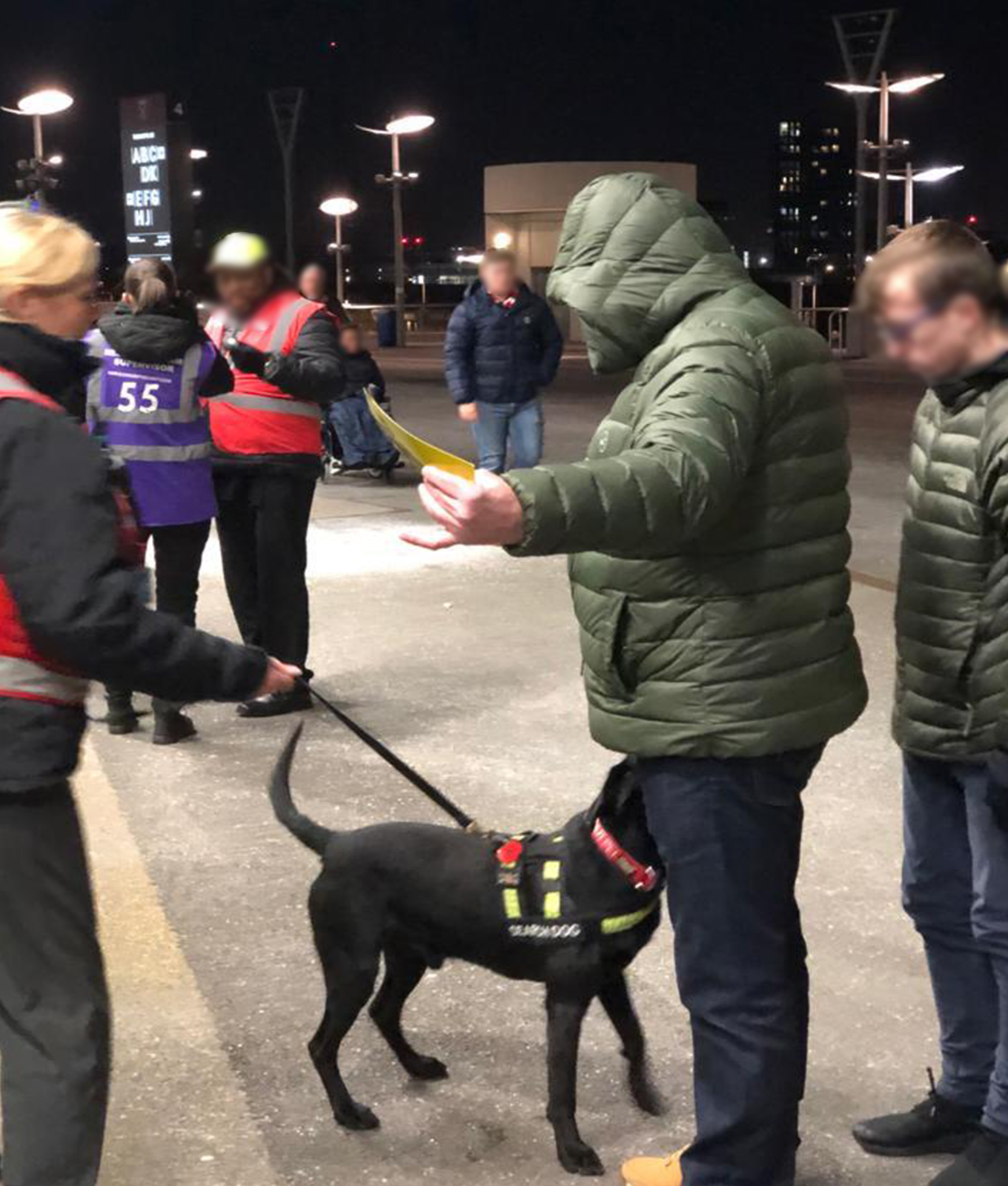 pyrotechnic detection dogs