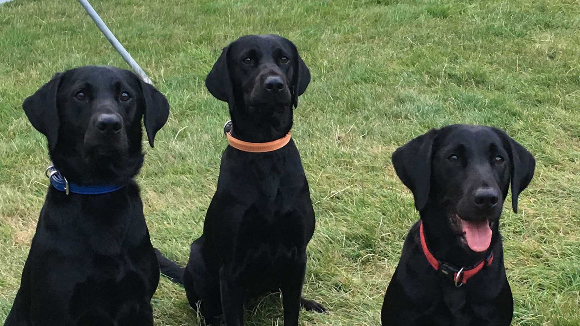 3 canine  search dogs